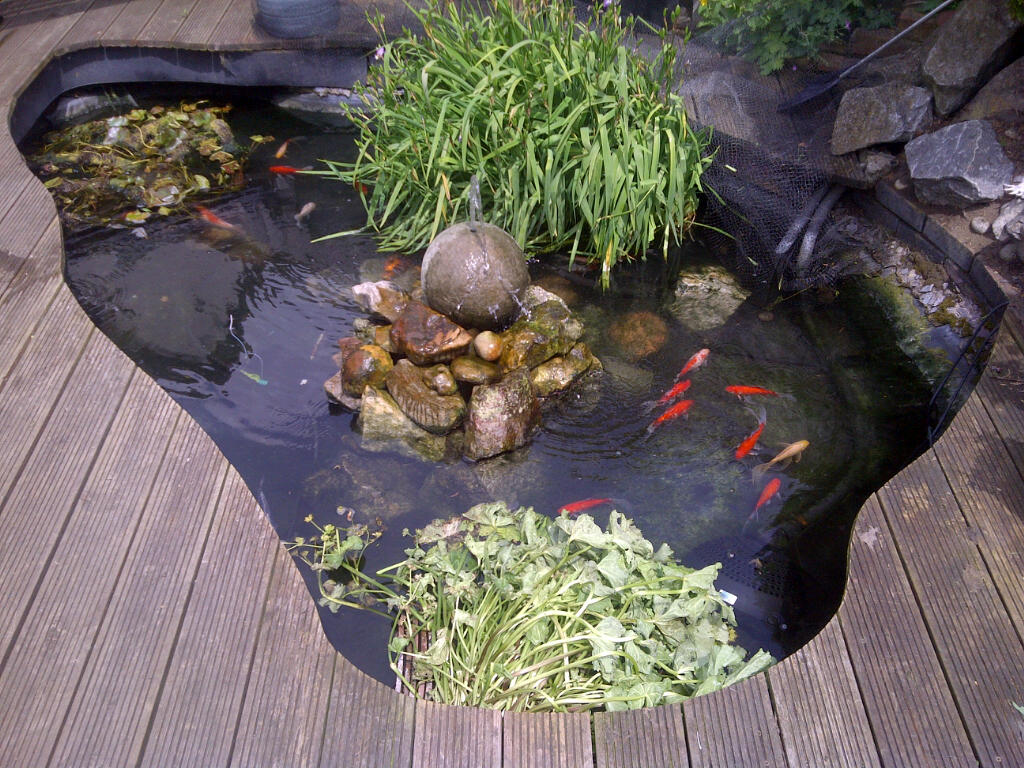Pond cleaned and looking pristine with a nice selection of Goldfish.